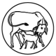 calf-feding_1